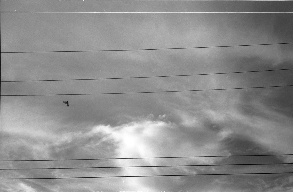 Like-a-Bird-on-a-Wire-Moscow-2014
